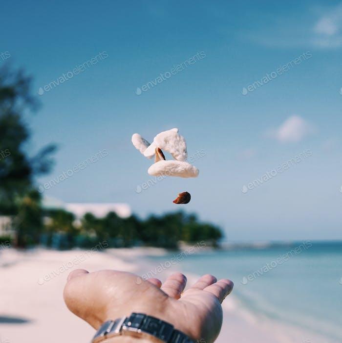 Levitating seashells and rocks