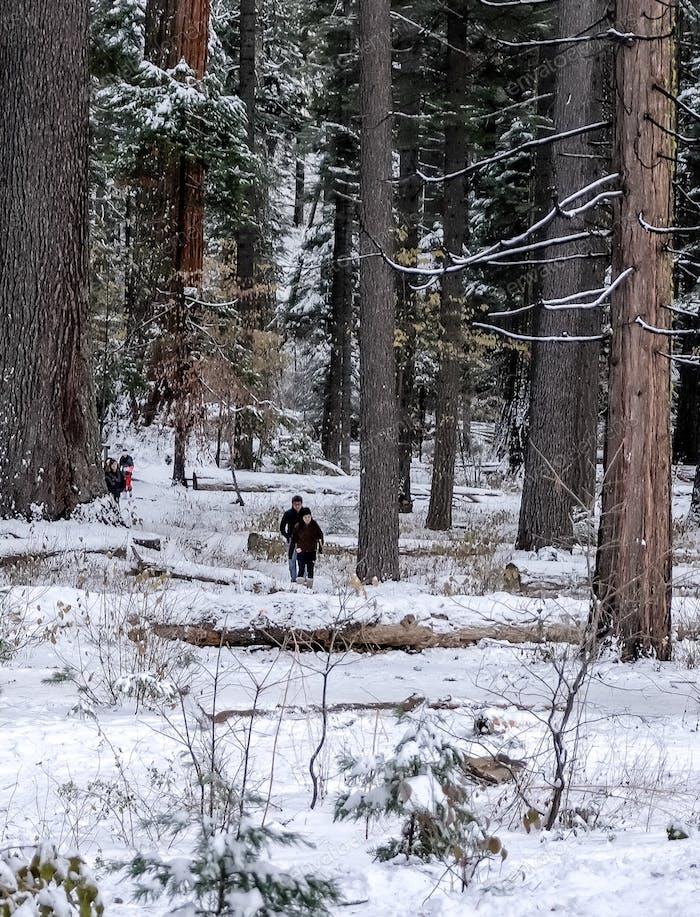 Walking in the winter wonderland; the snowy Calaveras Mountain