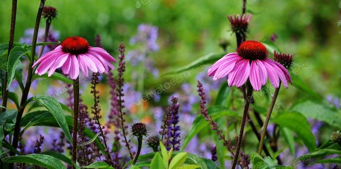 Flowers #flowersphotography #flowersphoto #flowerstalking #flowerday #flowersday #flowerslove