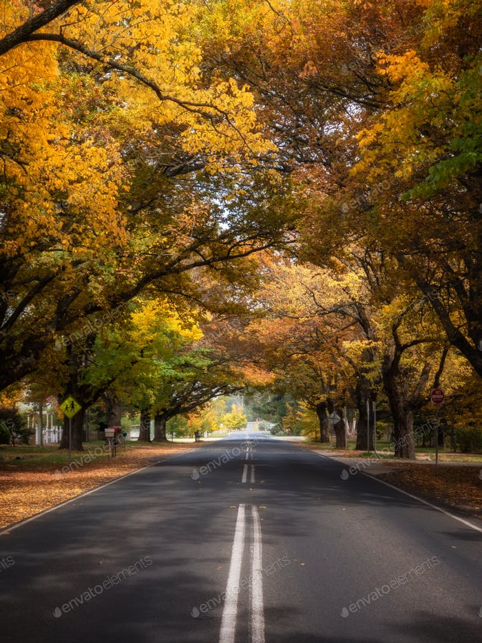 Road lined up with Autumn colours
