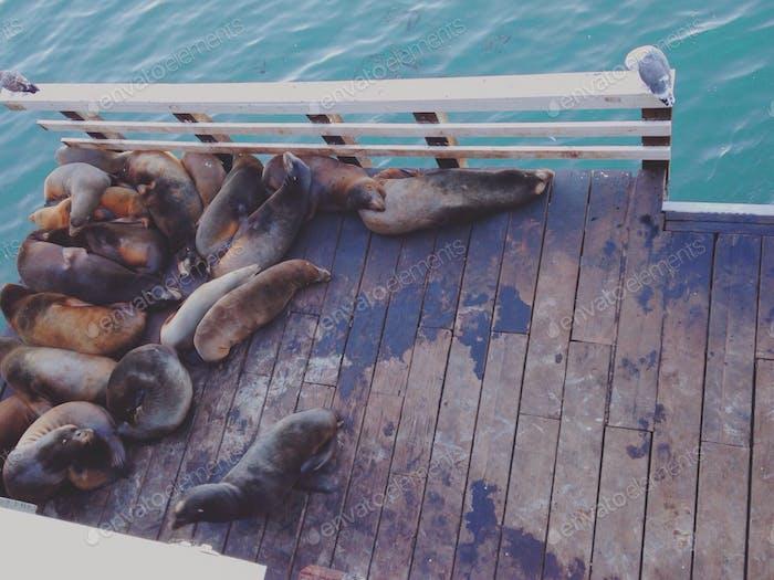 Lazy seals
