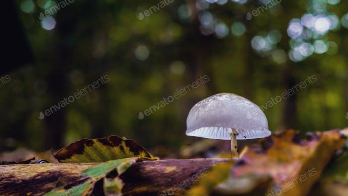 Single white mushroom