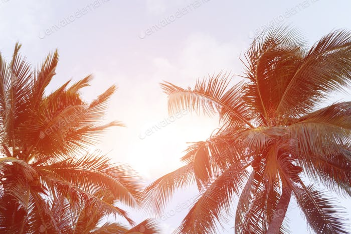 Background with palm leaves and sky
