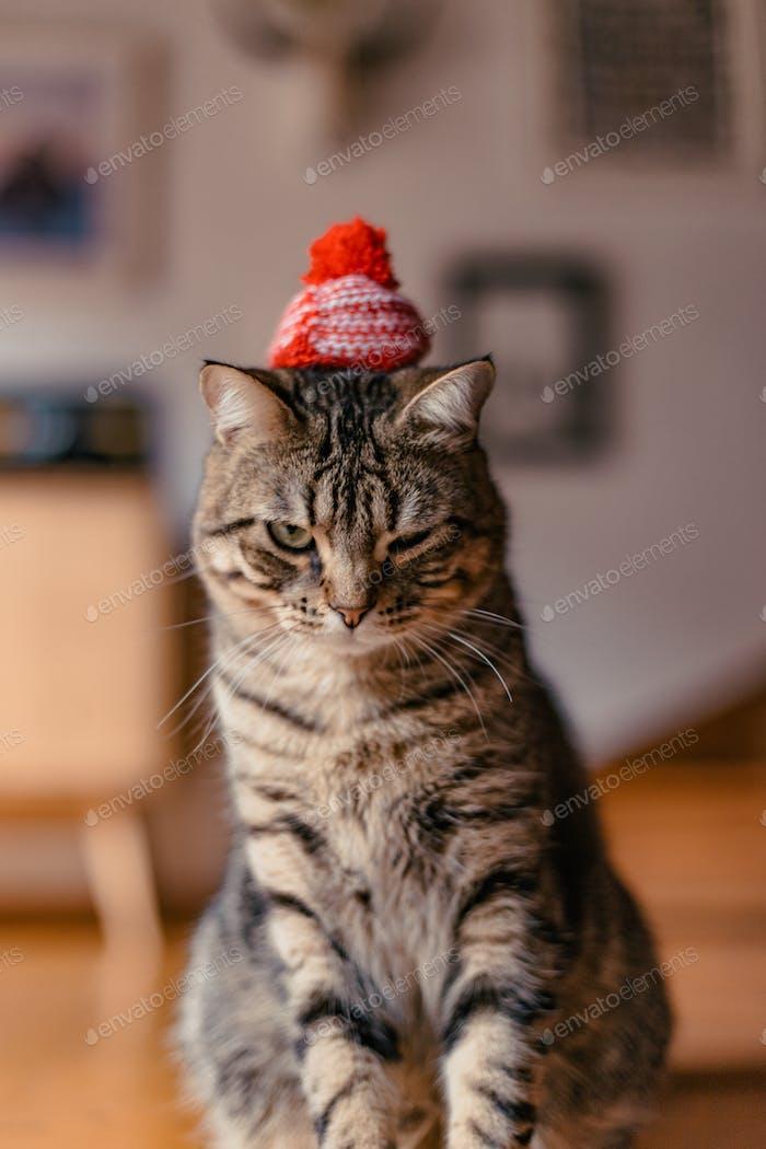 A grumpy stripy cat wears a tiny red beanie hat