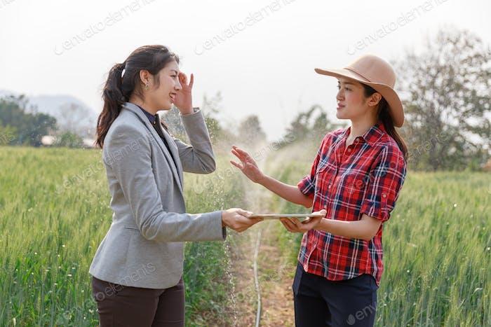 Geschäftsfrau studiert Einkommen in der Landwirtschaft. Agronomen mit Tablette untersuchen Weizenernte auf dem Feld.