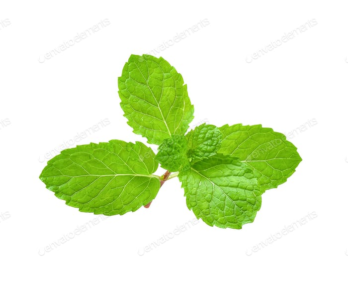 Mint isolated on white with clipping path