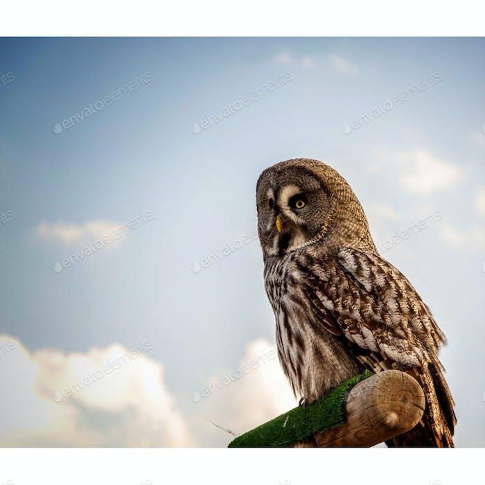 Owled On.