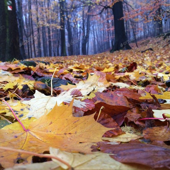Fall in Czech Republic forest