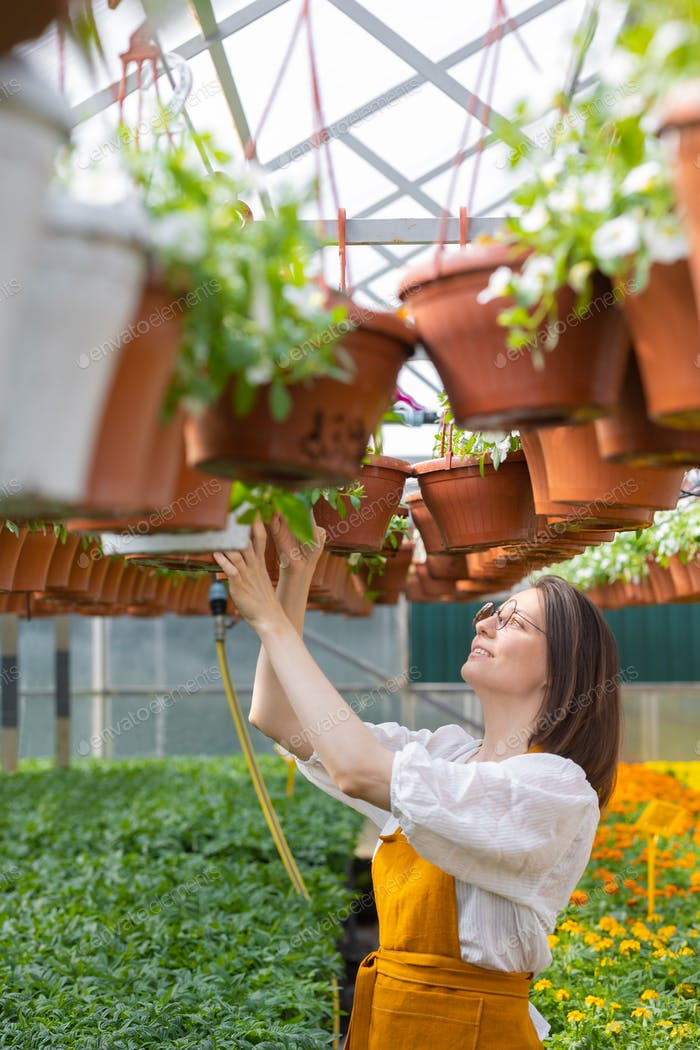 production of plants in greenhouses and farms for plants. agriculture or farming