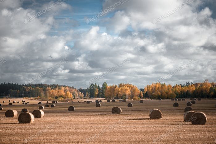 Hay bale. Agriculture field with sky. Rural nature in the farm land.