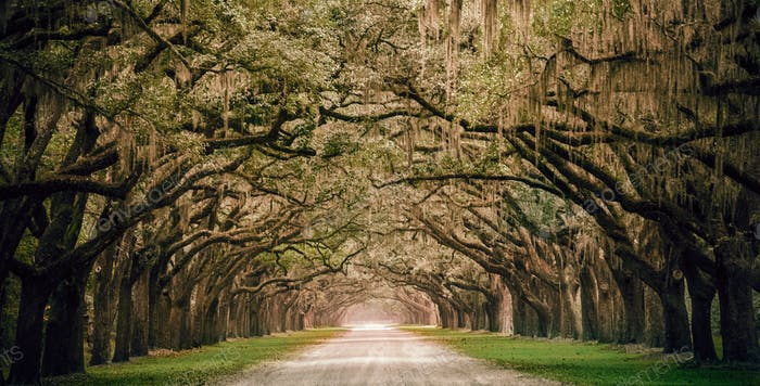 One of the most beautiful plantations I have ever seen