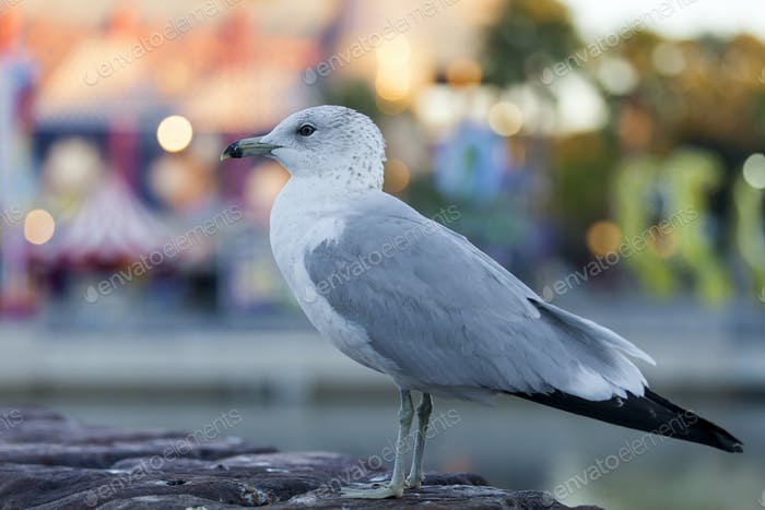 Seagull at the Universal Studios, Orland, FL