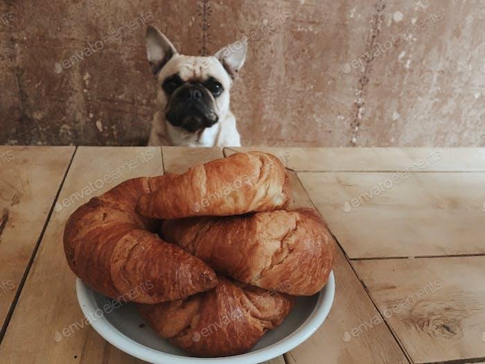 doggy wanna eat