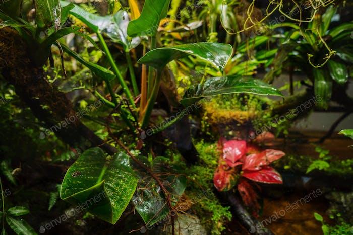 Tropical rainforest lush vegetation