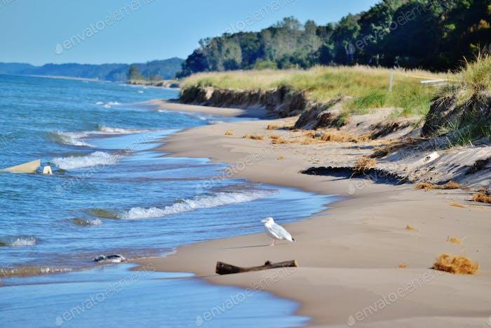 The shoreline of Lake Michigan! Beach landscape