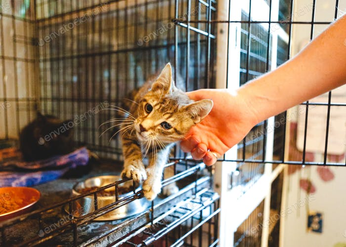 Gatito quiere mascotas