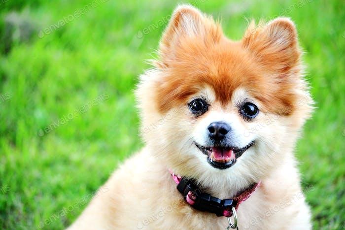 Adorable smiling dog