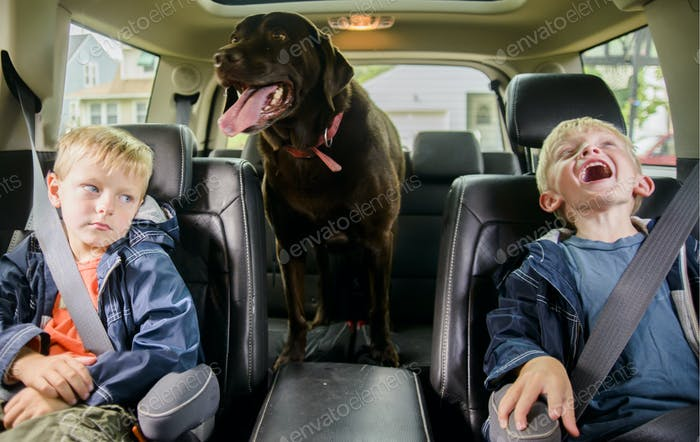 Twin brothers w very different personalities in backseat with dog