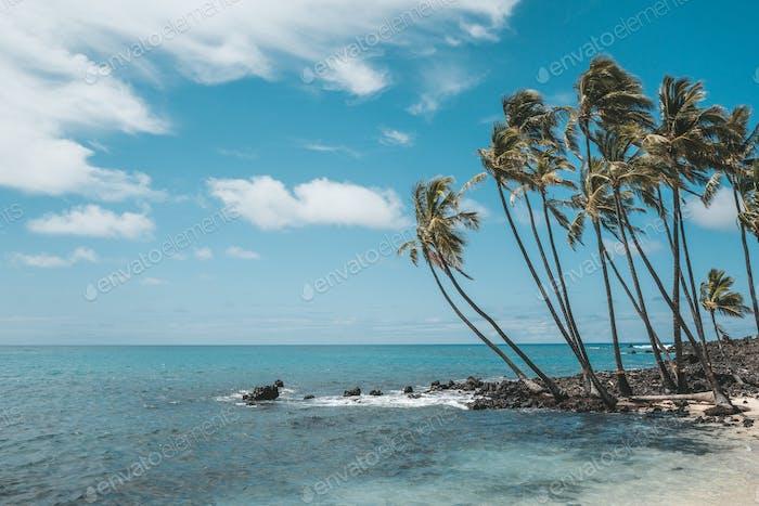 Palmen am idyllischen Strand