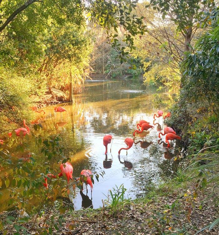 Flamingo-Bereich im Zoo.