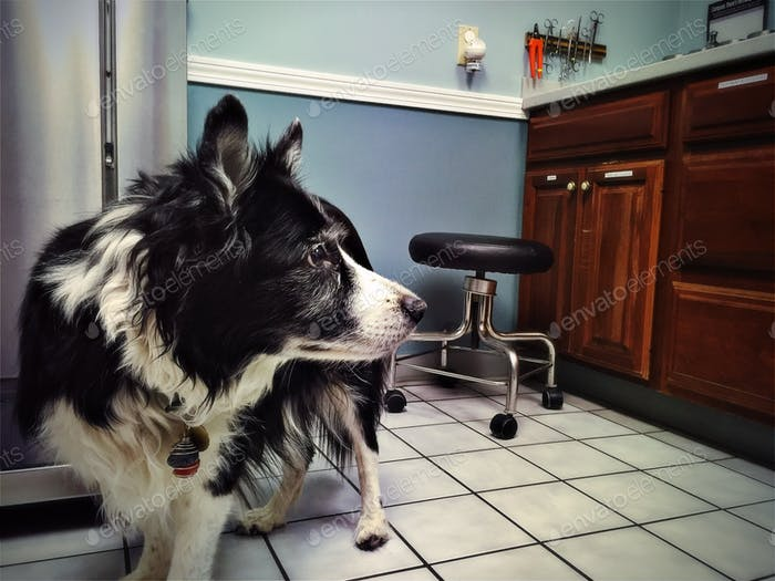 Dog at the veterinary office