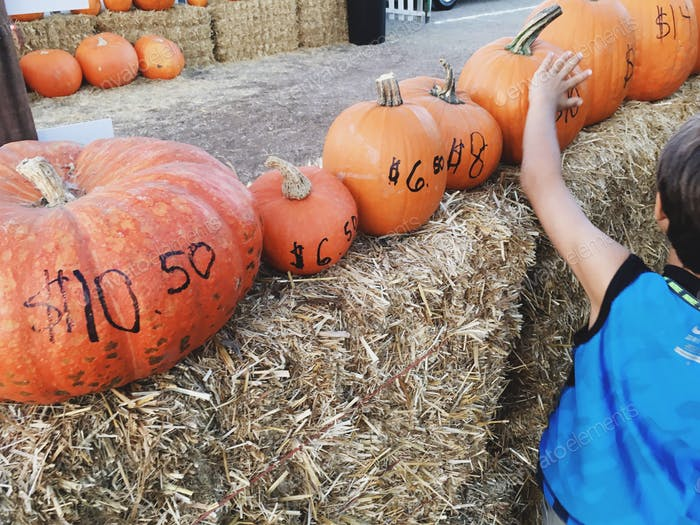Pumpkins and prices