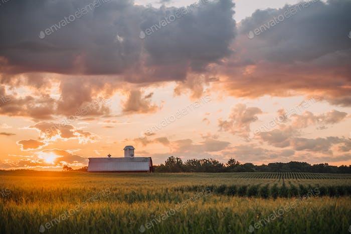 Indiana sunrise over a barn in a cornfield