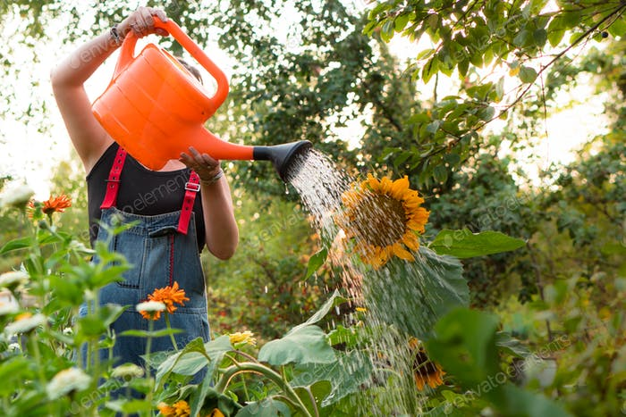 woman watering flowers in garden at summer sunset time