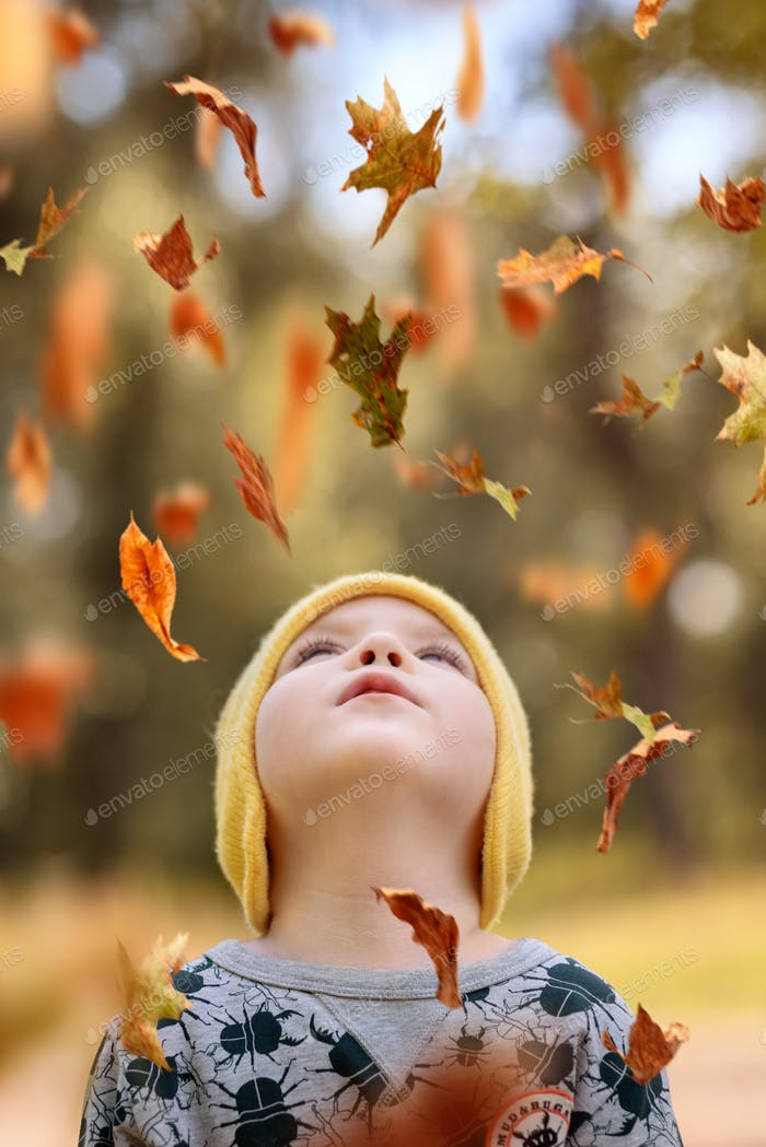 The boy looks at the autumn leaves falling from above