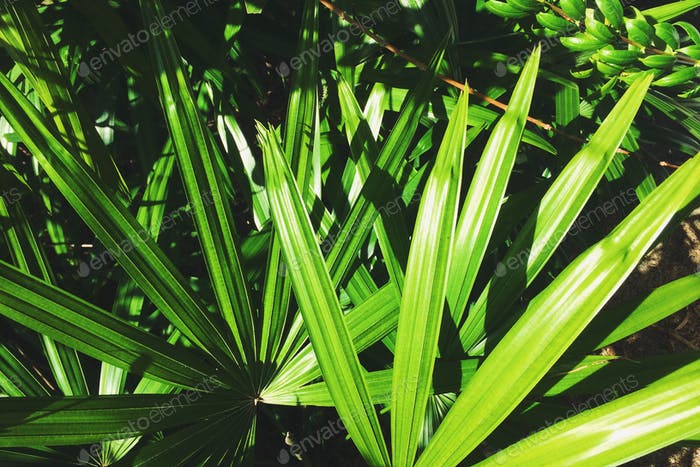 Tropical plant pattern background