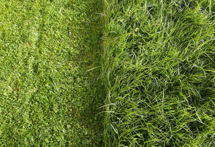 Lawn in two