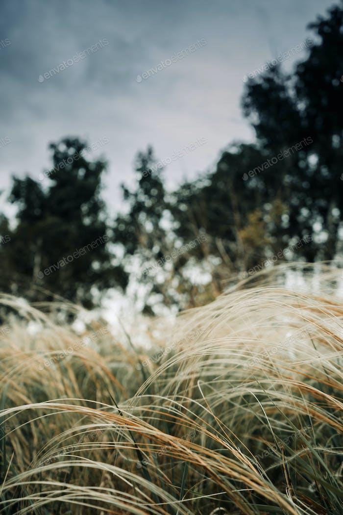 forest, grass, field