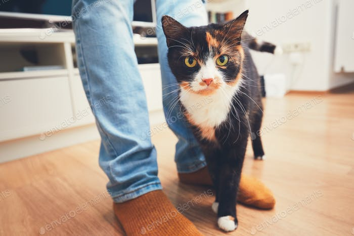Domestic life with pet. Playful cat and his owner at home.