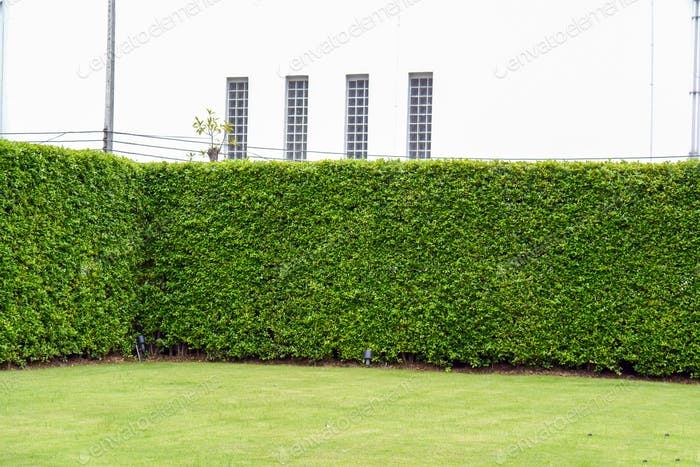 structure summer texture tile uneven wall wallpaper weed