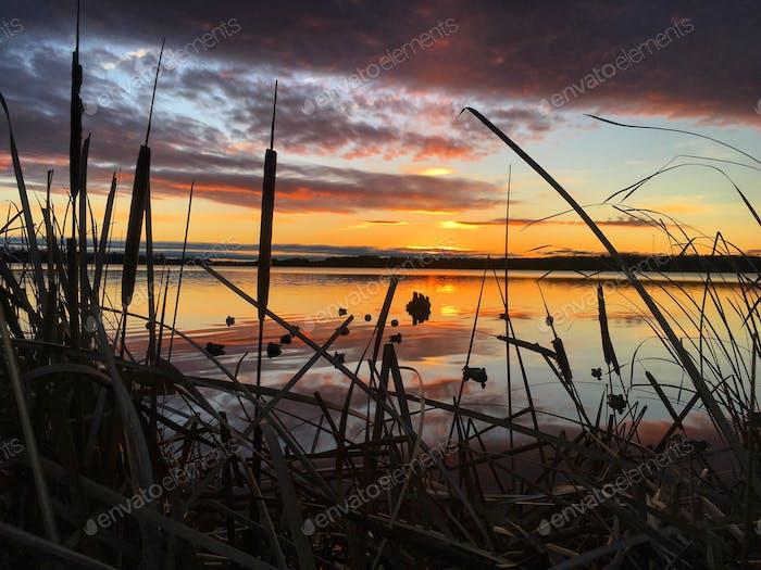 Duck hunting in Ontario