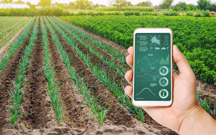 A hand is holding a smartphone with infographics on the background of field of young green leek