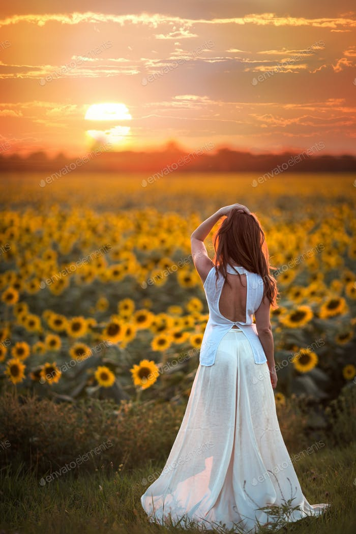 Sunset in sunflower.