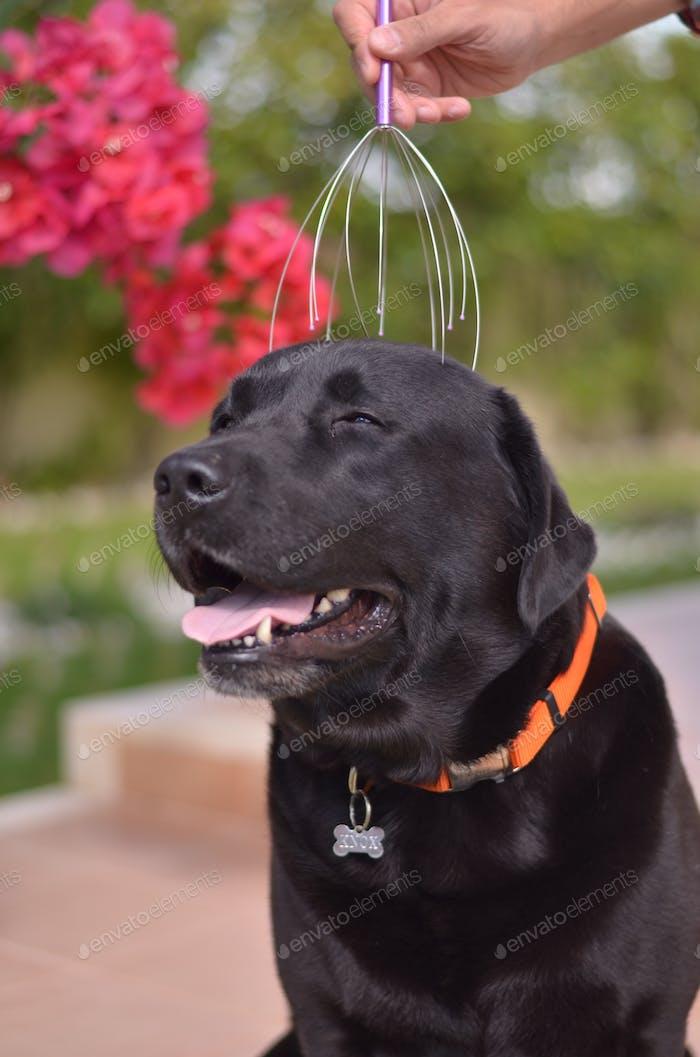 Doggy Massage