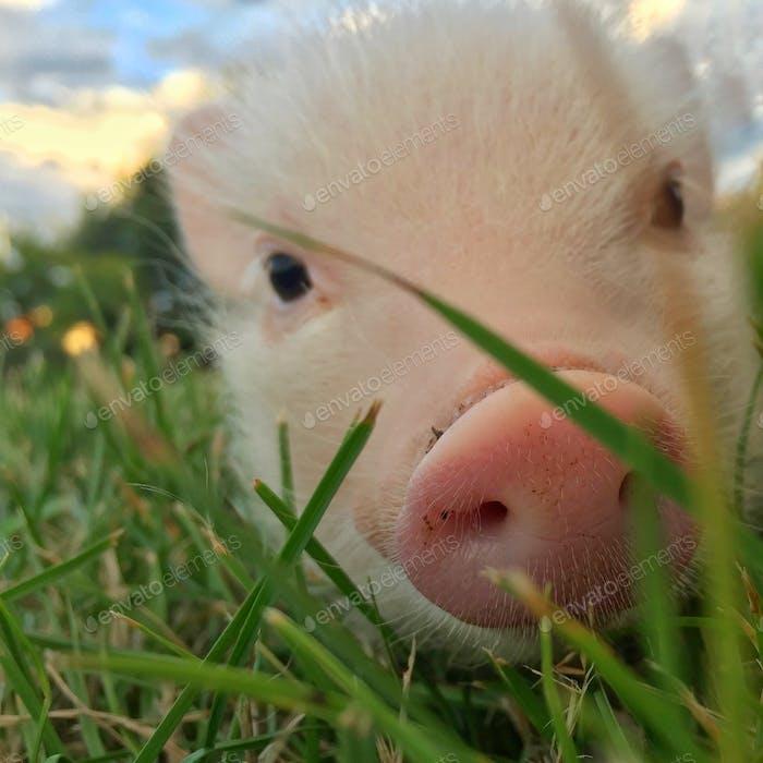 My piggy friend