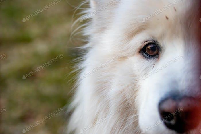 A dog portrait