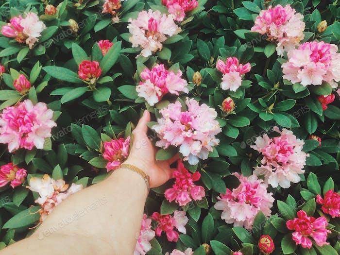 Vsco flowers