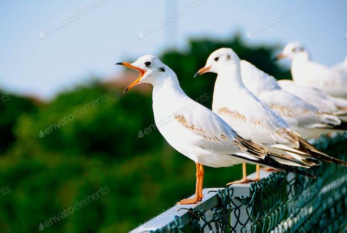 The Singing Birdie 🎶🎵🎵