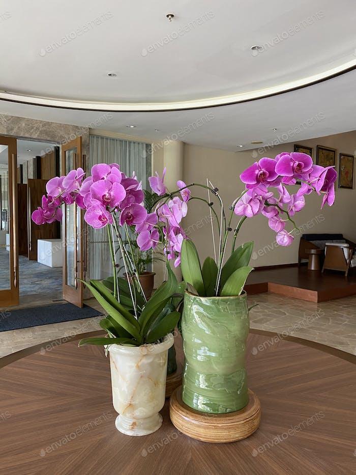 Orchid arrangement.