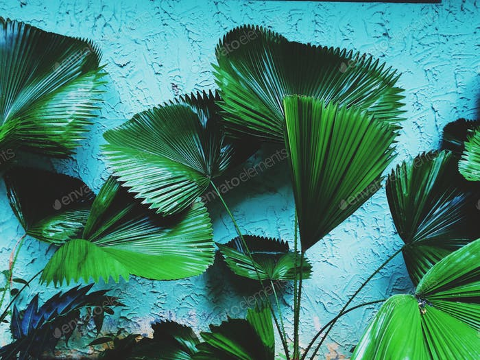 Tropical plants wall background