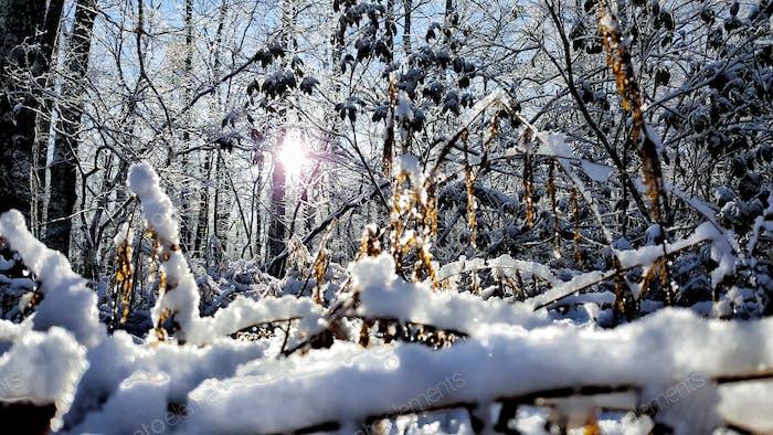 Ein kühler Winterabend!