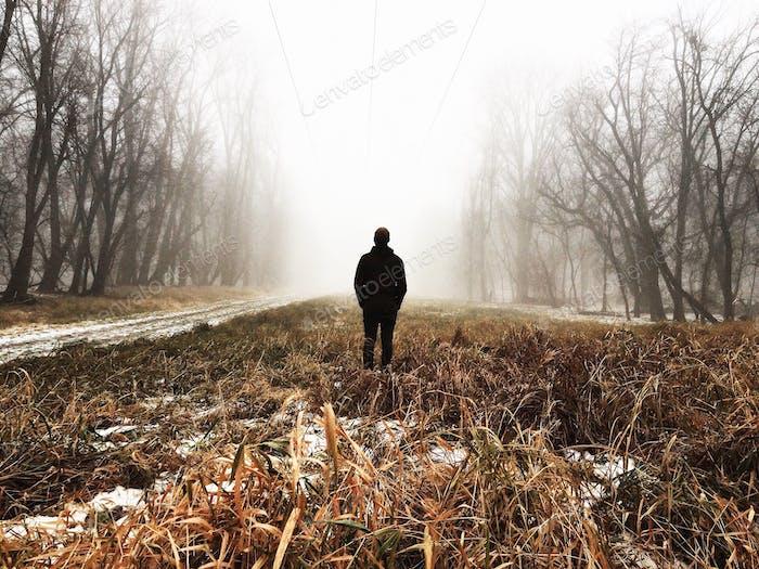 Foggy Woods in Winter