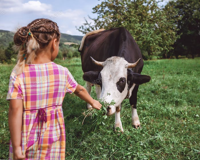 Kid feeding cow with green grass during their summer vacation on the farm