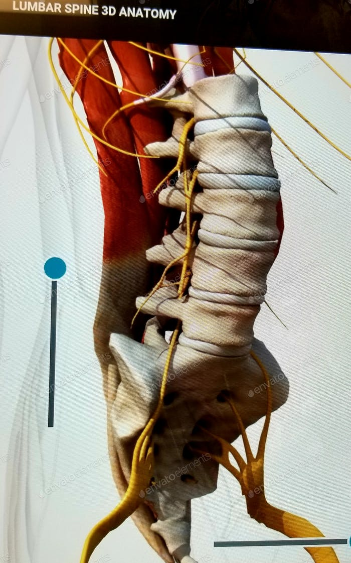 Lumbar Spine!