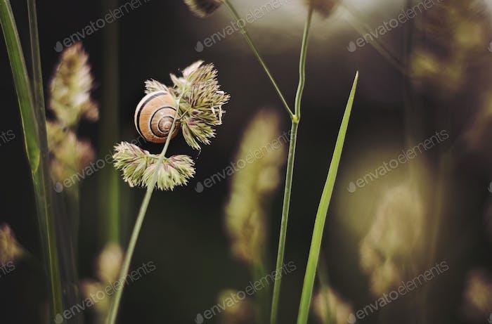 Un caracol escalando un tallo de hierba.