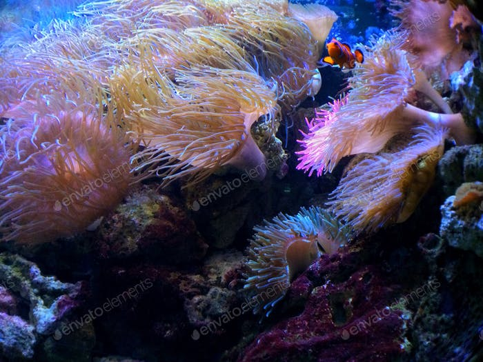 My underwater travel companion